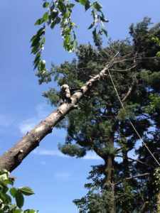 Seasonal Planting and Pruning